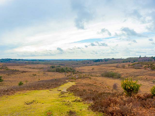 New Forest Conveyancing